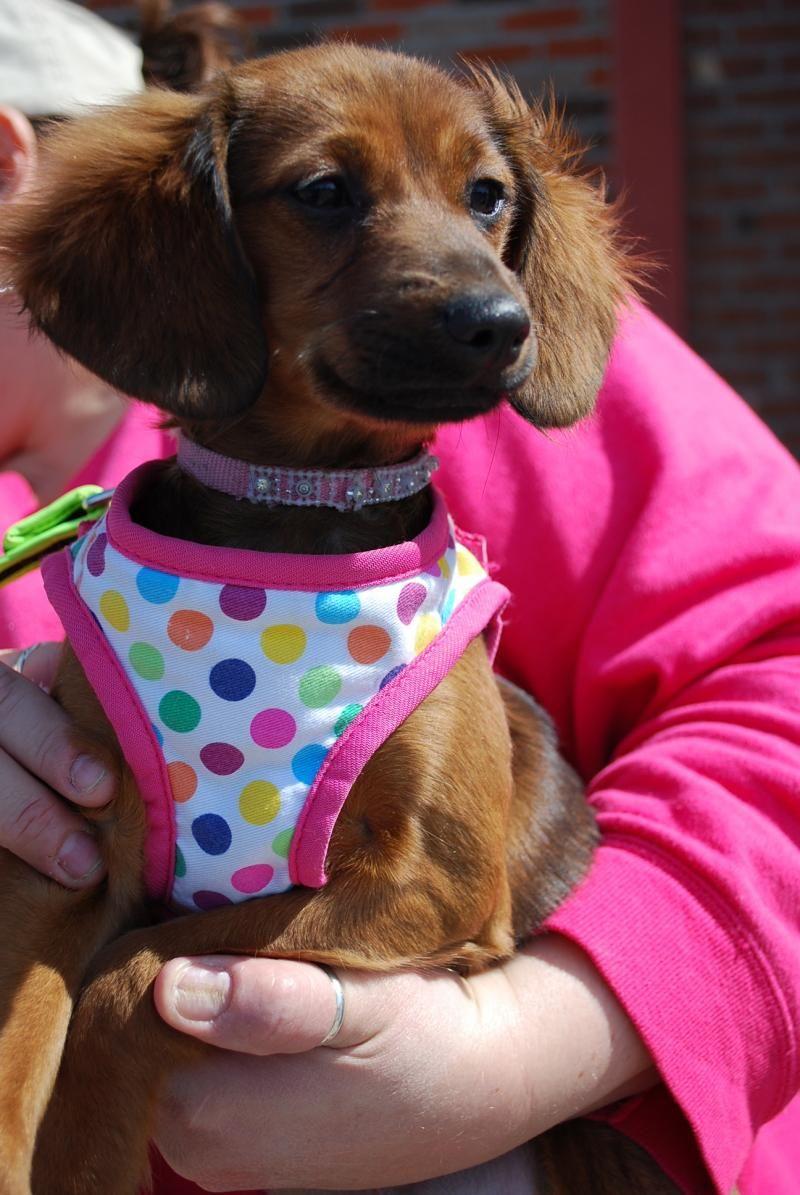 Adopt Lexi on Adoption, Cute puppies, Pet adoption