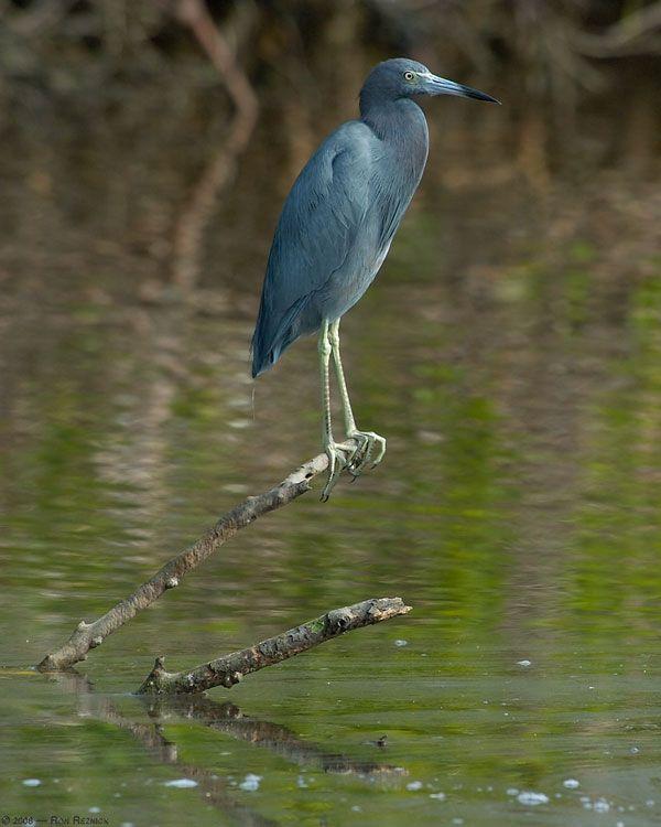 Beautiful-Bird-Photos27