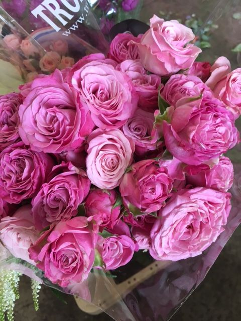 Garden Spray Roses - Lady Bombastic  Sold in bunches of 10