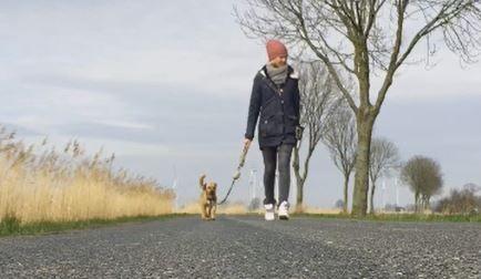 So Zieht Dein Hund Nicht Mehr An Der Leine Hunde Hund Lauft