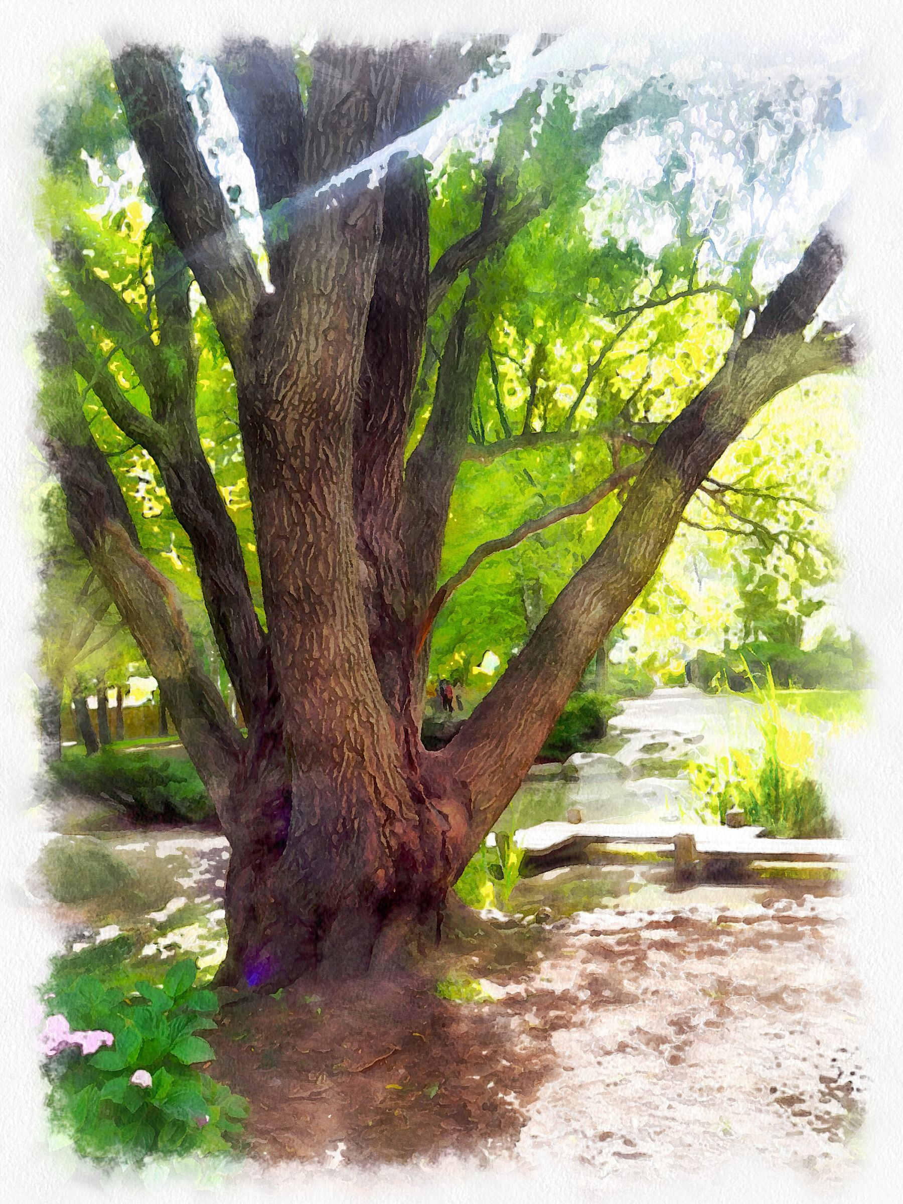 Toronto, Kariya Park (Mississauga) Processed with Dynamic Auto Painter www.mediachance.com
