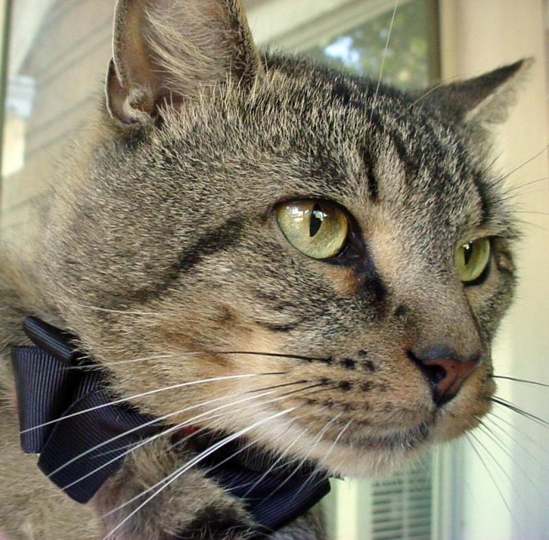 Adopt Houston on Animal companions, Adoption, Pets