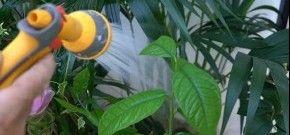 Soigner Les Plantes Avant Un Depart En Vacances Arrosage Jardin