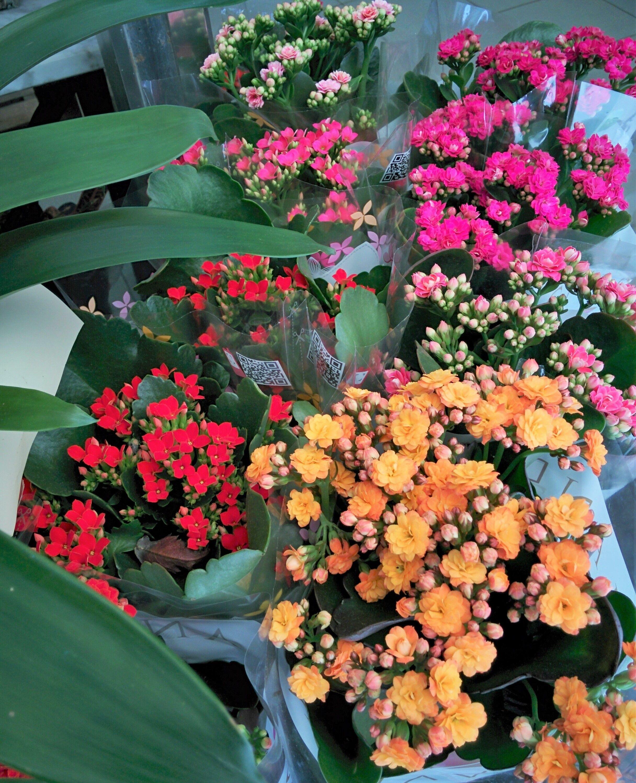 Plantes amb flors per al jard Plantas con flor para el jard n