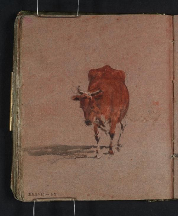 A Brown Cow, Seen from the Front