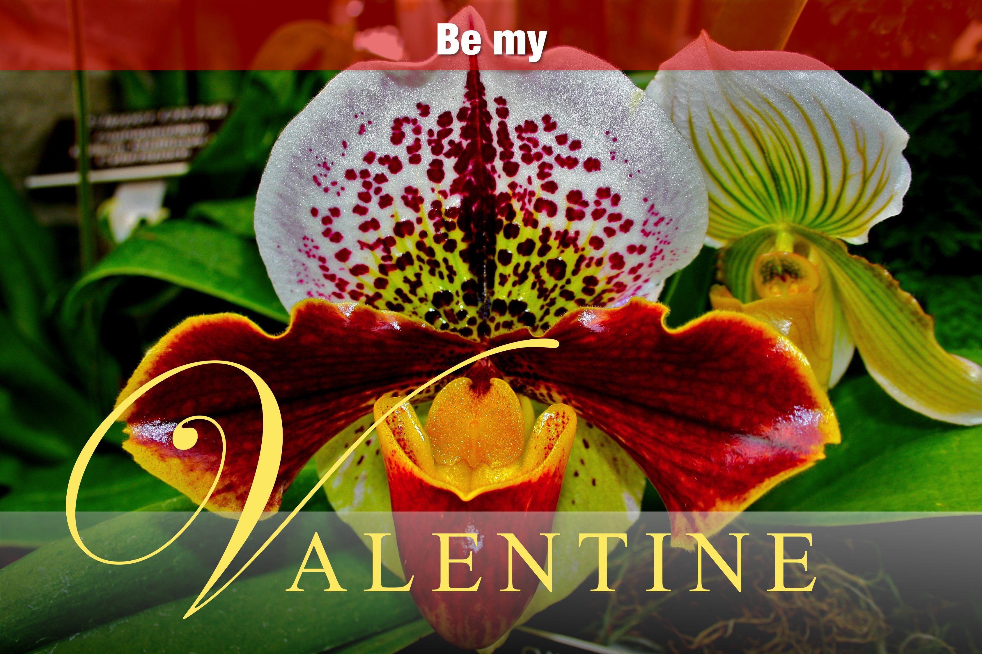 Happy Valentine S Day From Lewis Ginter Botanical Garden Lewis Ginter Botanical Garden Happy Valentines Day Happy Valentine