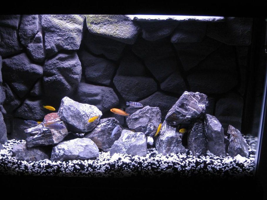 My african cichlid tank with homemade 3d background in 45 for Fish tank background ideas