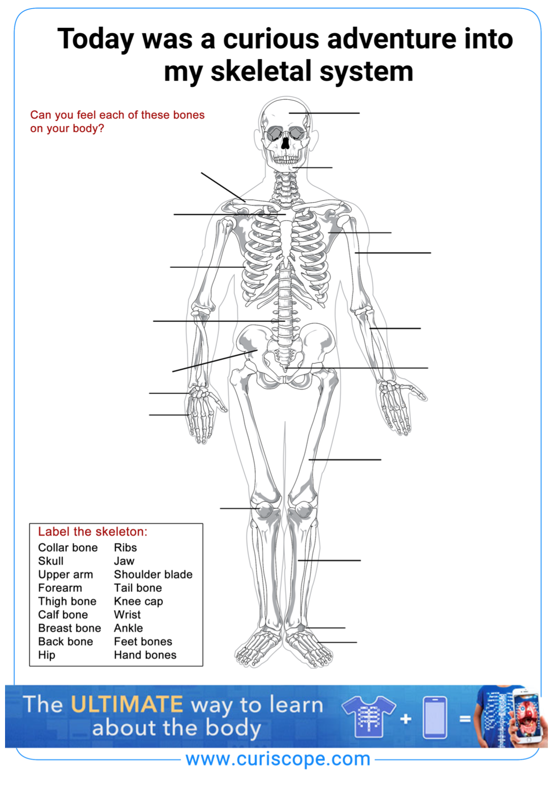 Teach Children All About The Human Body With Our