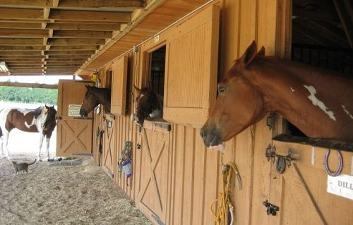Dream stables ideas for my future
