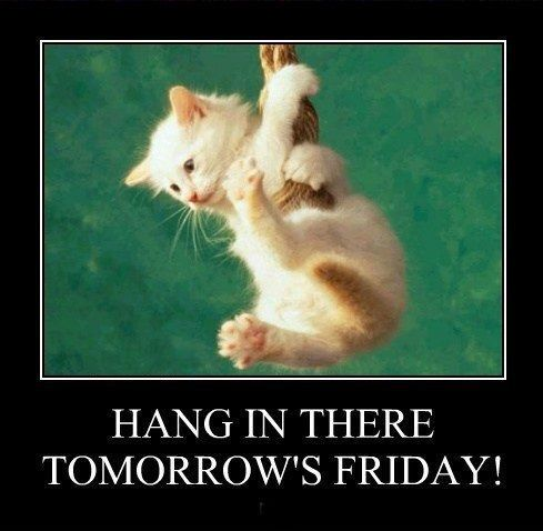 Tomorrows Friday Quotes Cute Quote Friday Kitten Days Of