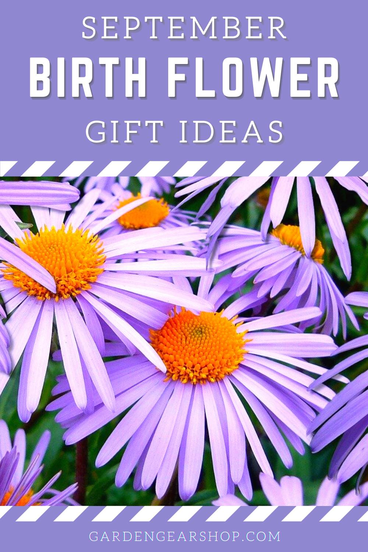 September Birth Month Flower Gift Ideas In 2020 Flower Gift Ideas Birth Flowers September Birth Flower