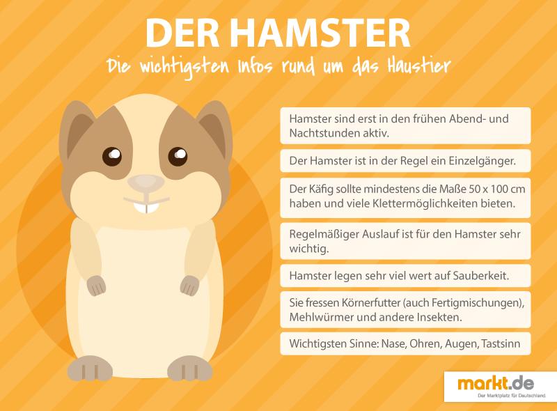 Wie sieht artgerechte Hamsterhaltung aus Hamster