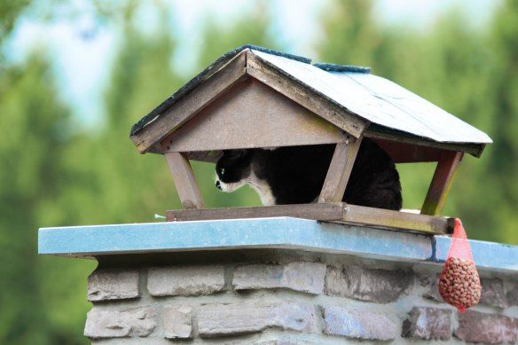 20 moments of cat mischief caught on camera. Please don't tell a soul about nr. 7… | Veronique Puts
