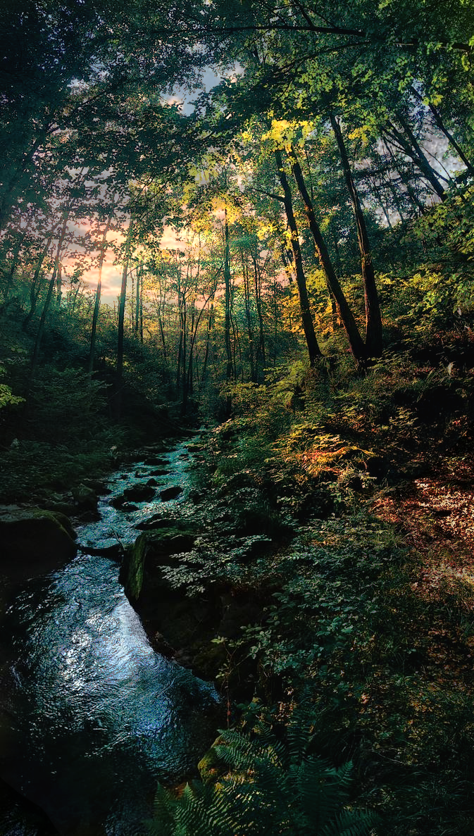 Stream next to a forest trail only locals know of Italy's alps. [OC] [673x1187]