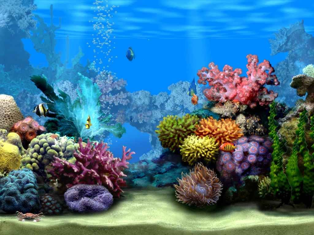 Ocean Reef Habitat Among The C As They Swim Along Floor Wallpaper