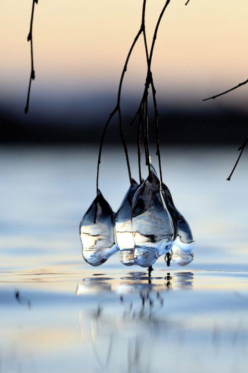 Ice drops by Kolbjørn Pedersen on 500px   hummingbird006 Source: packlight-travelfar