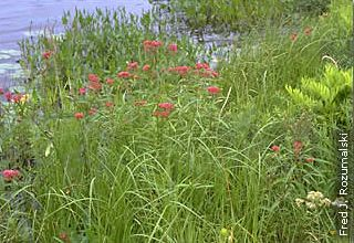 native plants growing on lakesshore