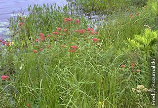 native plants growing on lakesshore