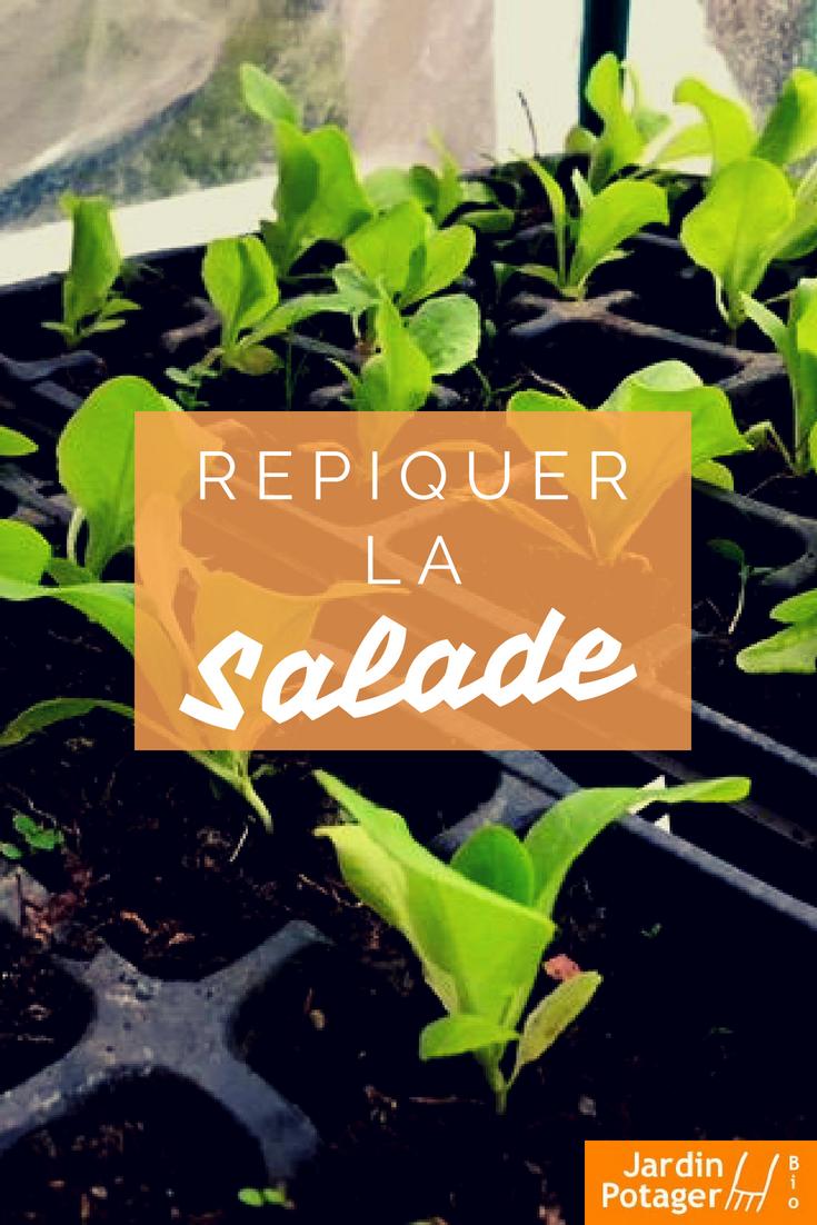 comment repiquer la salade et la laitue salade semer repiquer et planter de la salade. Black Bedroom Furniture Sets. Home Design Ideas