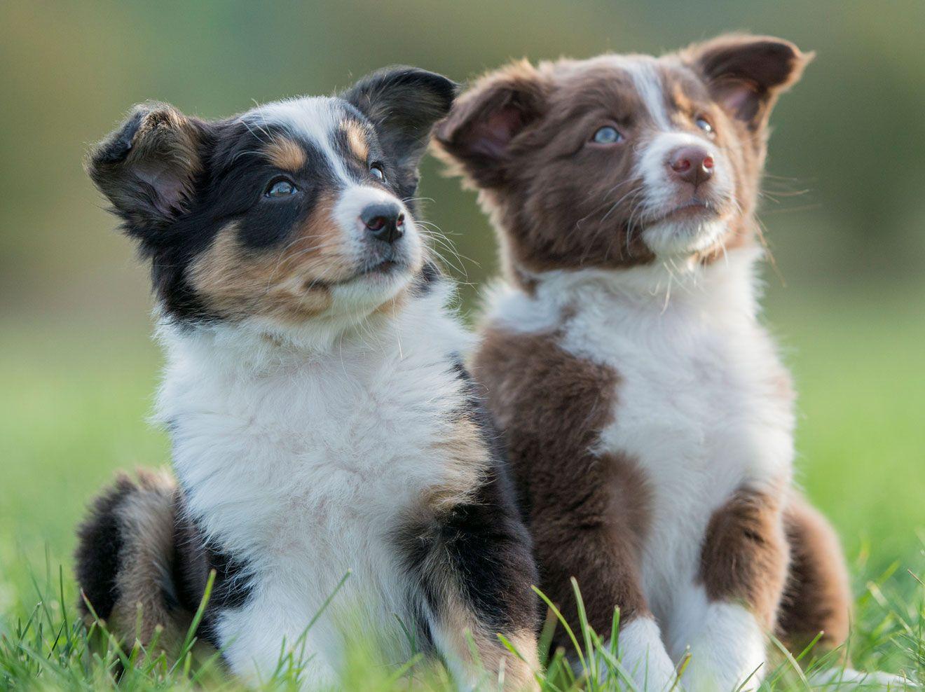 Beliebte Hundenamen von A bis N Hundenamen, Hunde und