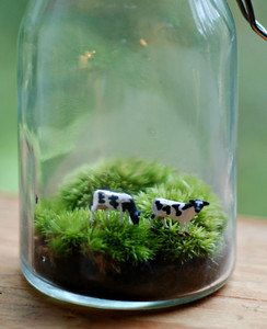 terrarium tiny cows in a pint jar by weegreenspot on Etsy, $30.00