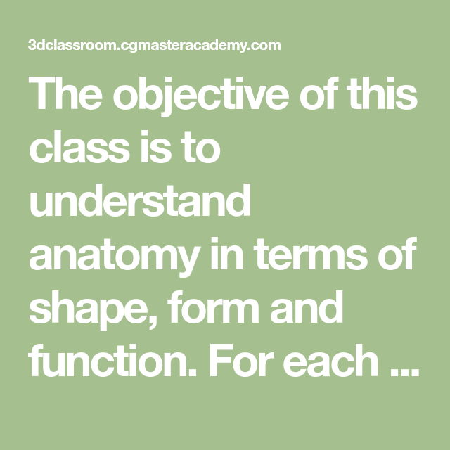 The Objective Of This Class Is To Understand Anatomy In Terms Of