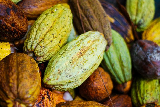 How magical is Costa Rica? Here, the chocolate literally grows on trees.