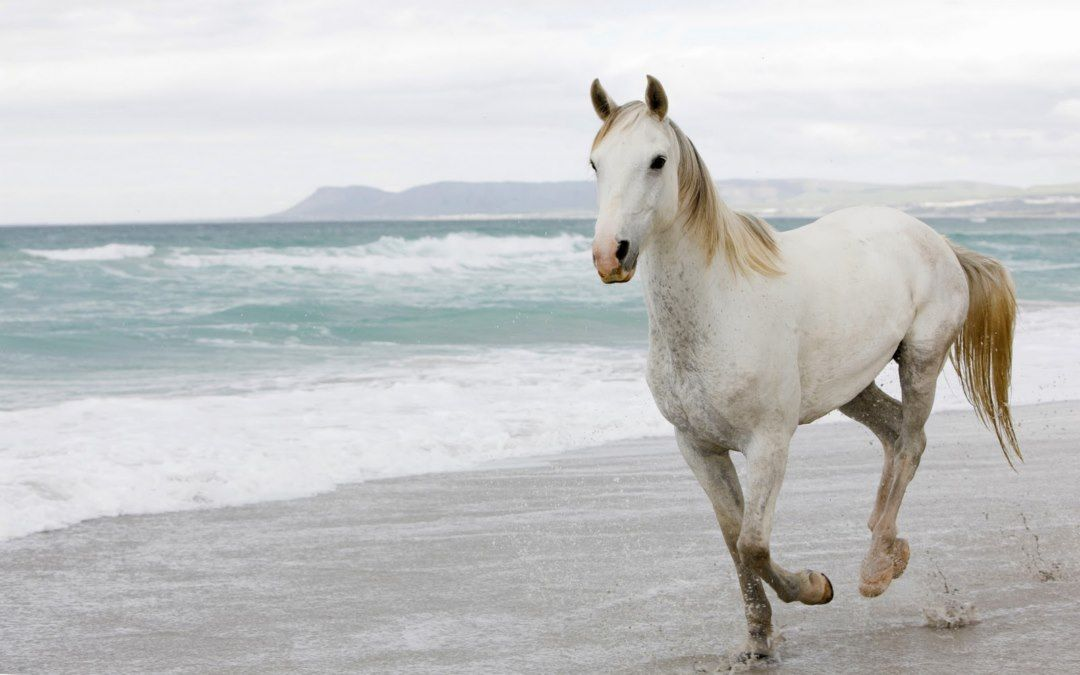 Horse Wallpapers Hd Pictures Free Download Horse Wallpaper