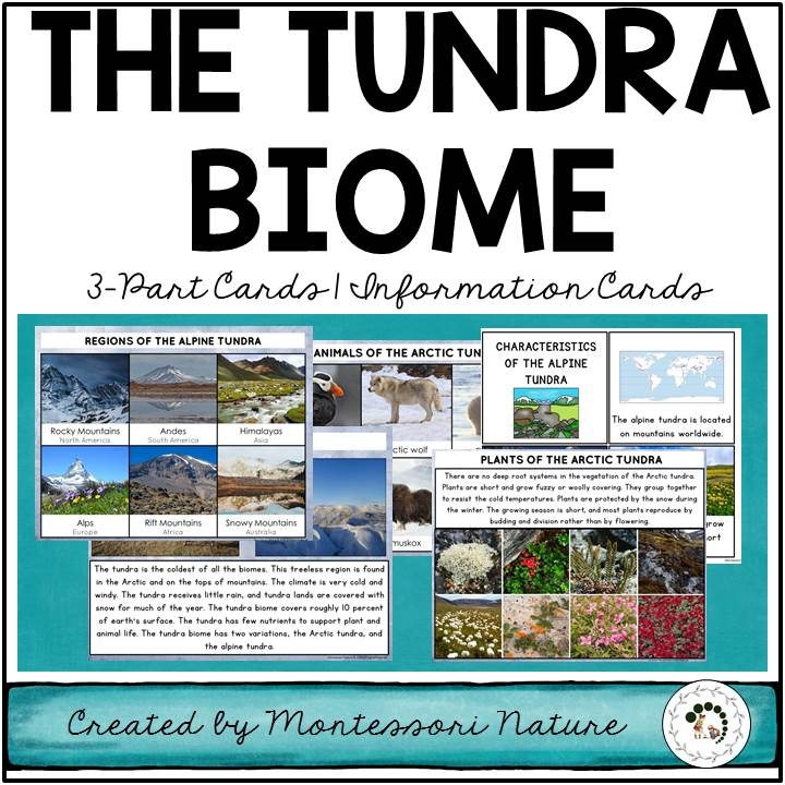 The Tundra Biome Nature Curriculum in Cards Biomes