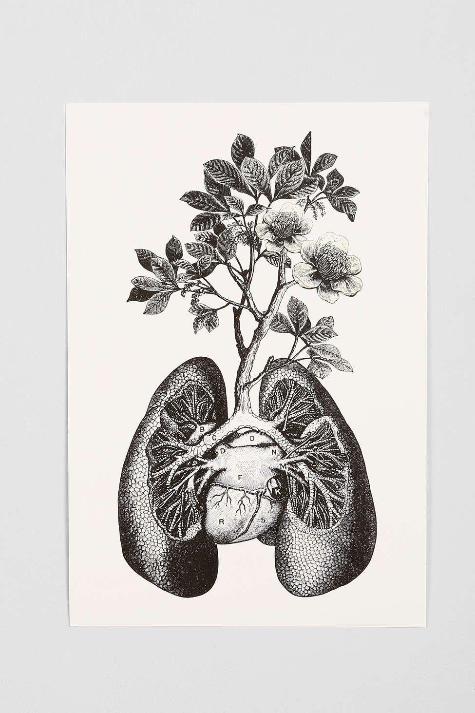 lungs art drawing wwwpixsharkcom images galleries