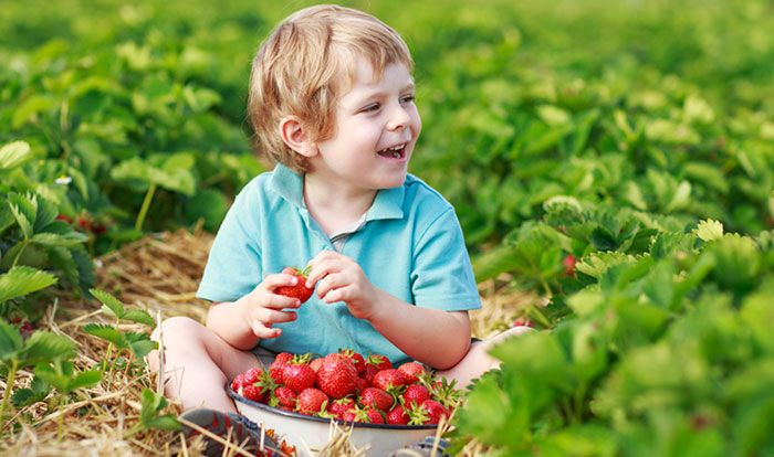 Did you know that you can give your children a fantastic experience by taking them along to a pick your own strawberry farm...