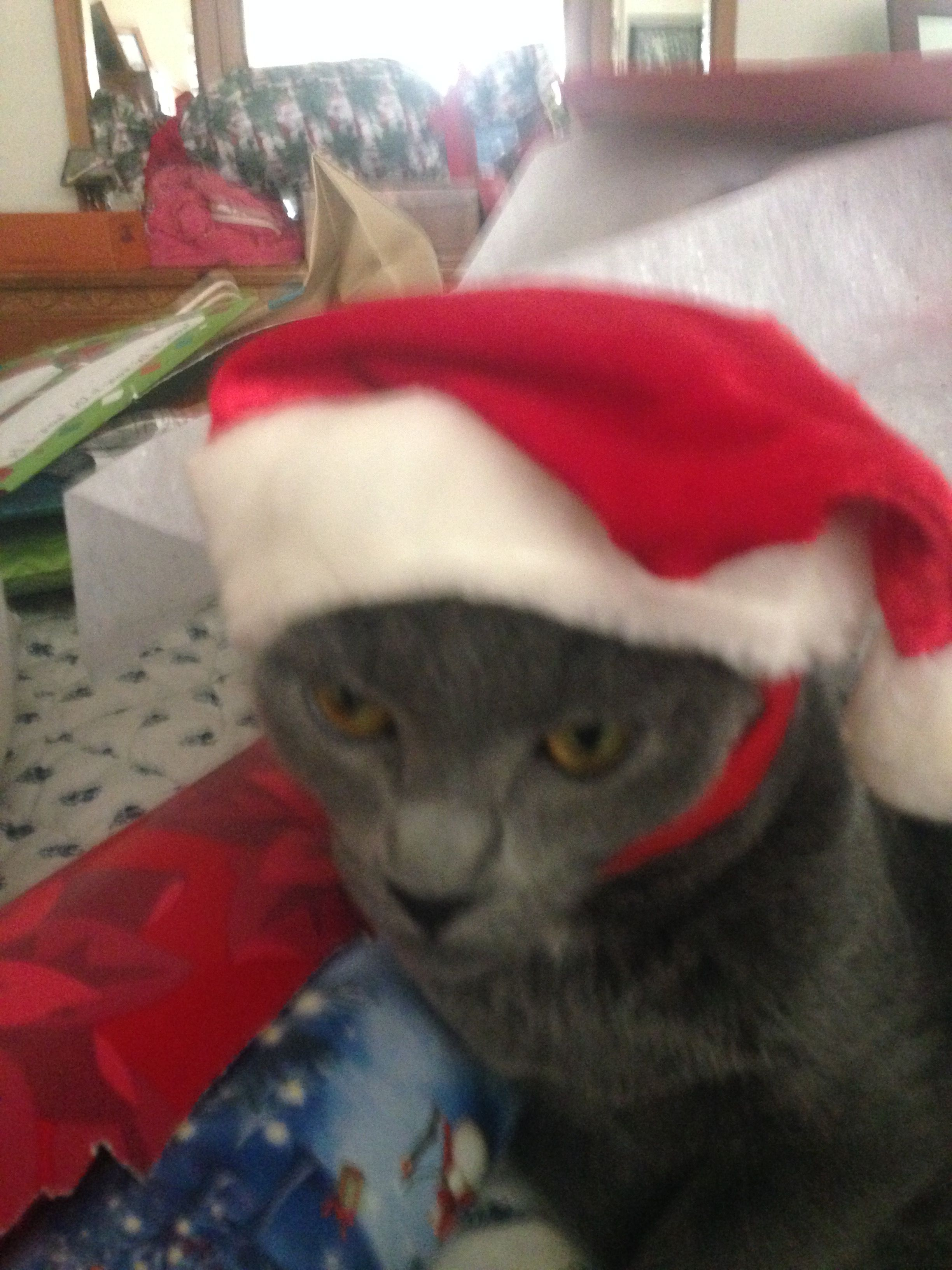 Christmas with Ellie) Cool hats, Animals, Hats