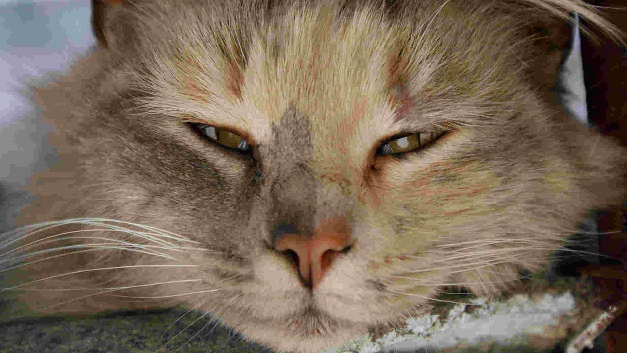 Animal With Squinty Eyes Google Search Cat Eye Discharge Watery Eyes Kitten Eyes