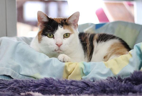 Eine freundliche und verschmuste Katzendame sucht ein
