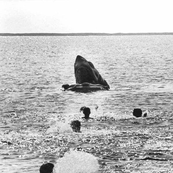 De una escena retirada de Jaws por ser «demasiado gráfica»