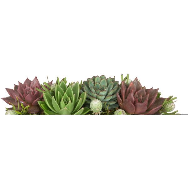 Jayson Home Succulent Rectangle Arrangement ($100) ❤ liked on Polyvore featuring home, home decor, floral decor, plants, fillers, art sets, grass, succulent and jayson home