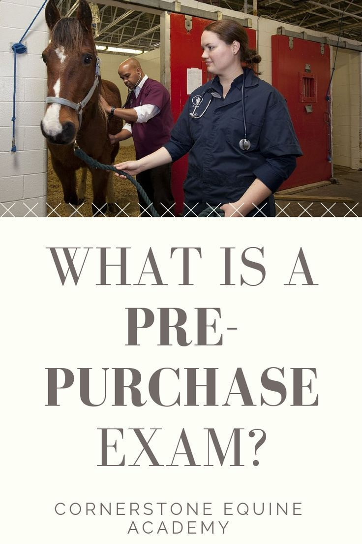 What is a PrePurchase Exam and Why Do You Need One