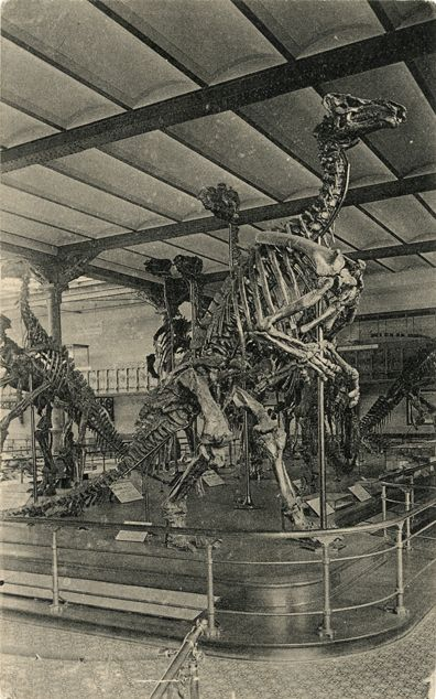 Postcard of Iguanodon at museum in Brussels, c.1920s.