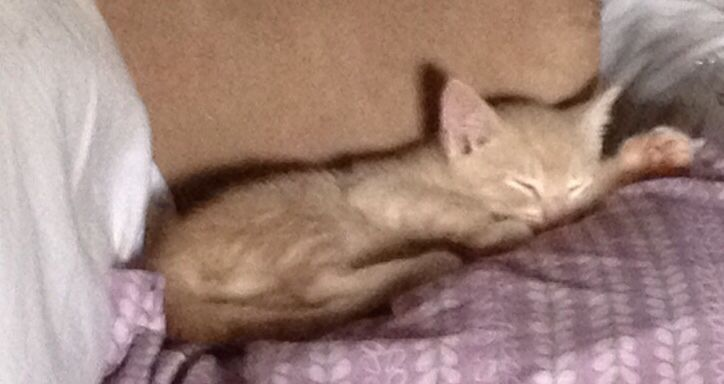 My kittys