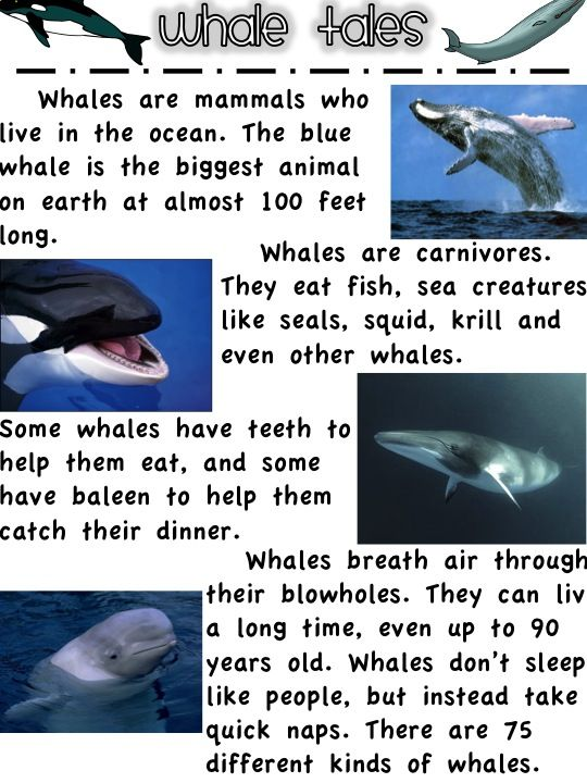 The blue whale essay example