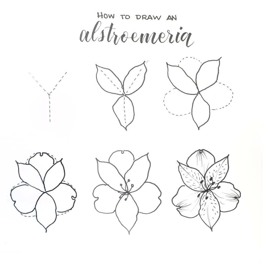 Liz Bullet Journal On Instagram How To Draw An Alstroemeria Aka Peruvian Lily Or Lily Of The Incas Flower Drawing Tutorials Flower Drawing Floral Drawing