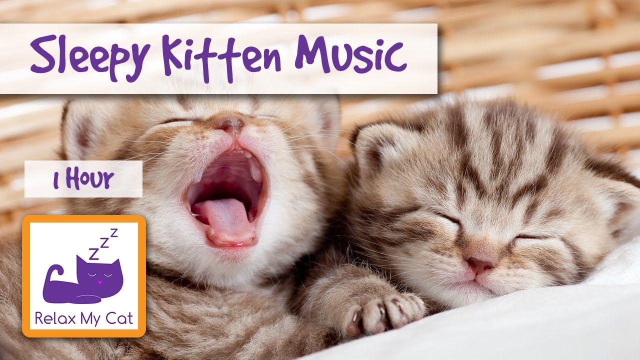 Sleepy Kitten Music The Perfect Music To Make Your Kitten Calm Down And Go To Sleep Sleepy Kitten Cats Cute Kitten Gif