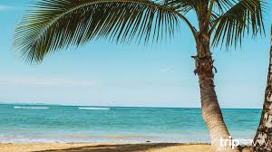 Zoom Virtual Backgrounds Free Google Search Travel Inspired Beach Background Background