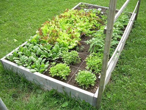 Square Foot Gardening Works Really Well! Better Yield Too.