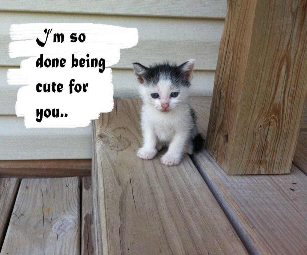 Kitten Cute Drink Milk Kittens Cutest Cutie Patootie