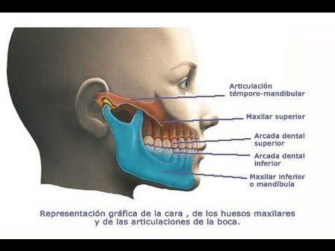 Bruxismo Dolor Y Tensión De La Mandíbula Tratamiento Con Ejercicios Automasajes Y Estiramientos Youtube Dolor De Mandibula Bruxismo Dental Mandibula