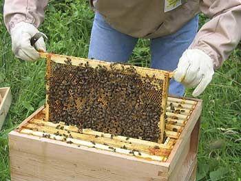 starting-beekeeping