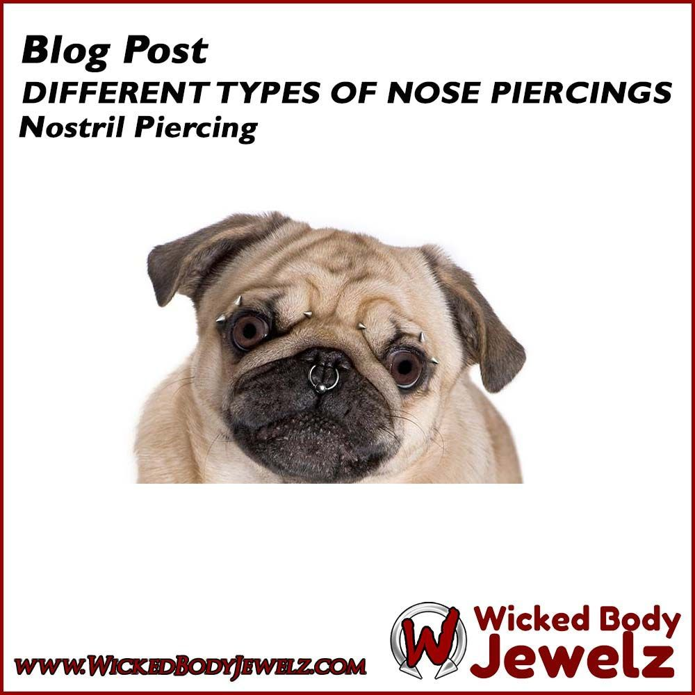 Upper nose piercing  DIFFERENT TYPES OF NOSE PIERCING Nostril Piercing Among the list of