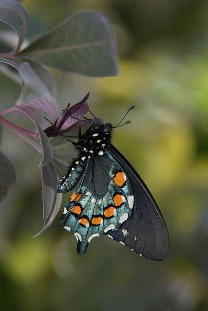 Spring Butterfly Exhibit At The Desert Botanical Garden In Phoenix, AZ