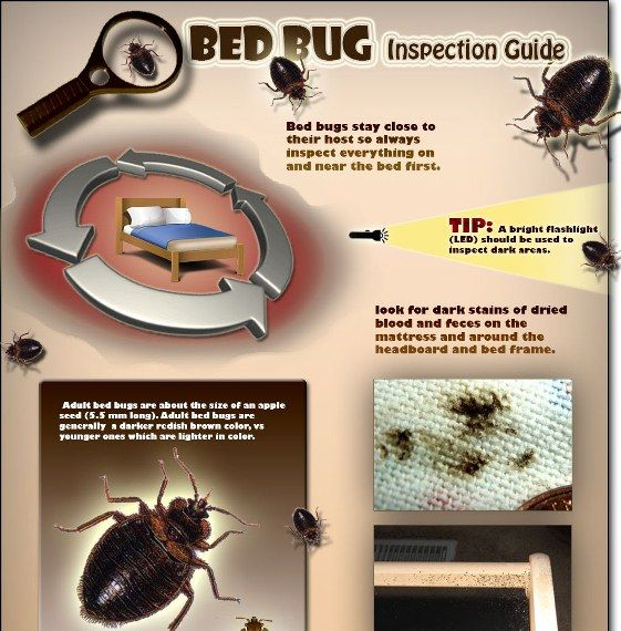 Bed Bug Inspection Guide Infographic Bed Bugs Bugs Pests